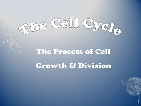 The Process of Cell Growth & Division. 1. How is the life cycle of a human and a single cell similar? 1. How is the life cycle of a human and a single.