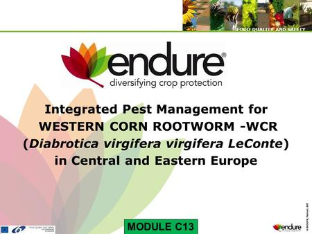 © ENDURE, February 2007 FOOD QUALITY AND SAFETY © ENDURE, February 2007 FOOD QUALITY AND SAFETY Integrated Pest Management for WESTERN CORN ROOTWORM -WCR.