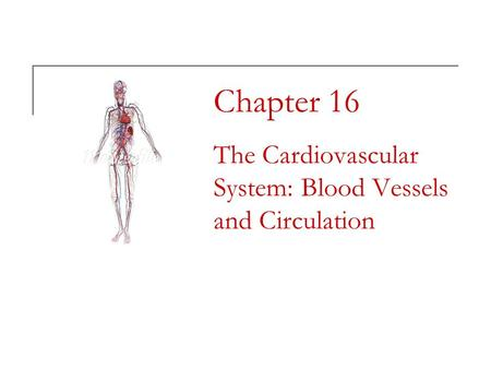 Chapter 16 The Cardiovascular System: Blood Vessels and Circulation.
