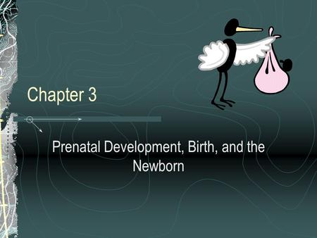 Chapter 3 Prenatal Development, Birth, and the Newborn.