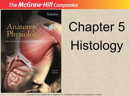 Chapter 5 Histology Copyright (c) The McGraw-Hill Companies, Inc. Permission required for reproduction or display.