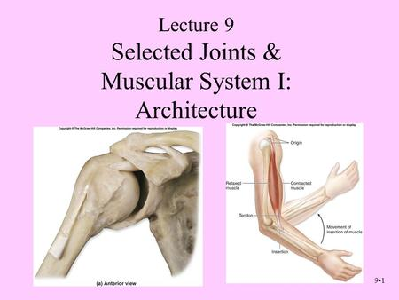 9-1 Selected Joints & Muscular System I: Architecture Lecture 9.