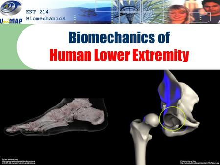 Biomechanics of Human Lower Extremity ENT 214 Biomechanics Picture retrieved from  Picture retrieved.