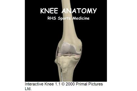 KNEE ANATOMY RHS Sports Medicine.