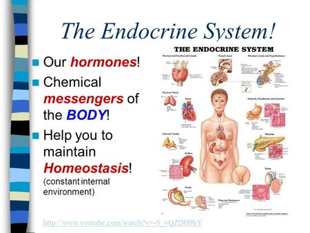 The Endocrine System! Our hormones! Chemical messengers of the BODY! Help you to maintain Homeostasis! (constant internal environment)
