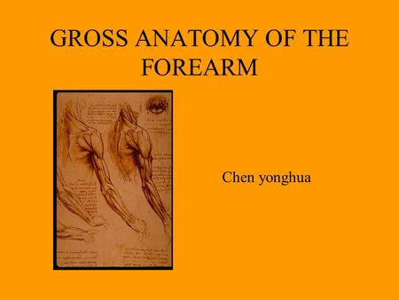 GROSS ANATOMY OF THE FOREARM Chen yonghua. Main Menu Bones of the forearm. Superficial muscles of the anterior compartment. Deep muscles of the anterior.