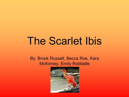 The Scarlet Ibis By: Brook Russell, Becca Roe, Kara McKinney, Emily Robitaille.