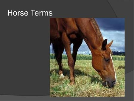 Horse Terms. Mare  Female horse  Usually after having an offspring.