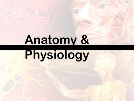 Anatomy & Physiology. Anatomy and Physiology is the study of the Human Body! All of the major systems- which organs are involved and how they all work.