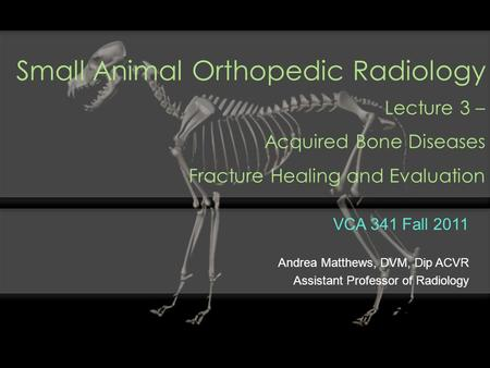 Small Animal Orthopedic Radiology Lecture 3 – Acquired Bone Diseases Fracture Healing and Evaluation VCA 341 Fall 2011 Andrea Matthews, DVM, Dip ACVR Assistant.