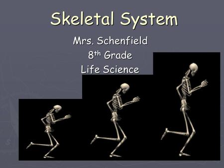 Skeletal System Mrs. Schenfield 8 th Grade Life Science.