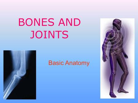 BONES AND JOINTS Basic Anatomy. The Skeleton The average human adult skeleton has 206 bones joined to ligaments and tendons Forms a protective and supportive.