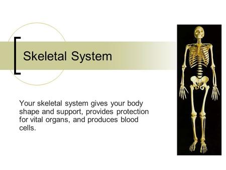 Skeletal System Your skeletal system gives your body shape and support, provides protection for vital organs, and produces blood cells.