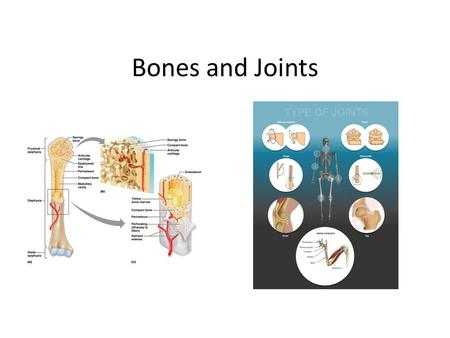 Bones and Joints.