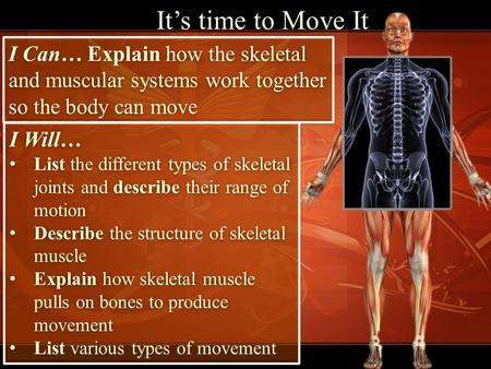It's time to Move It I Can… Explain how the skeletal and muscular systems work together so the body can move I Will… List the different types of skeletal.