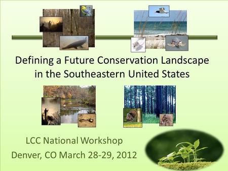 LCC National Workshop Denver, CO March 28-29, 2012 Defining a Future Conservation Landscape in the Southeastern United States.