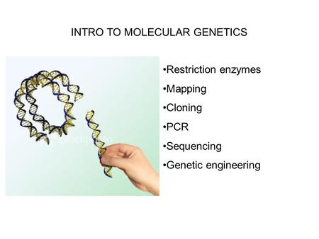 INTRO TO MOLECULAR GENETICS Restriction enzymes Mapping Cloning PCR Sequencing Genetic engineering.