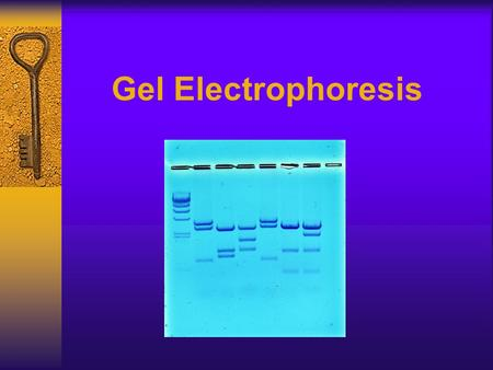 Gel Electrophoresis. What is Gel Electrophoresis? Gel electrophoresis separates molecules on the basis of their charge and size. The charged macromolecules.