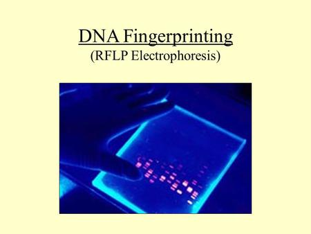 DNA Fingerprinting (RFLP Electrophoresis). DNA Double Helix Four nucleotide bases make up the chains of the double helix.