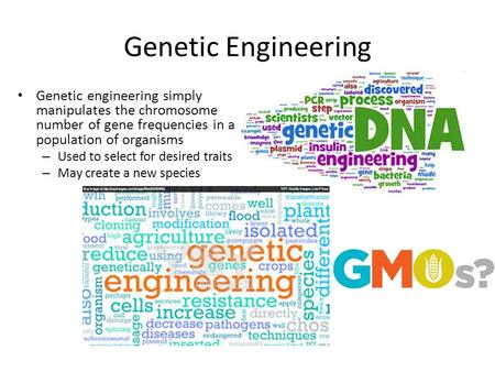Genetic Engineering Genetic engineering simply manipulates the chromosome number of gene frequencies in a population of organisms – Used to select for.