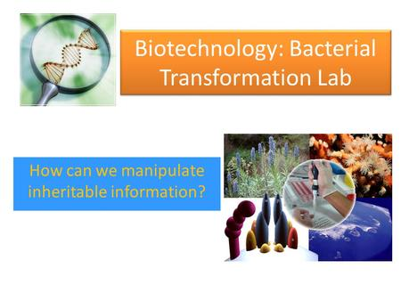 Biotechnology: Bacterial Transformation Lab