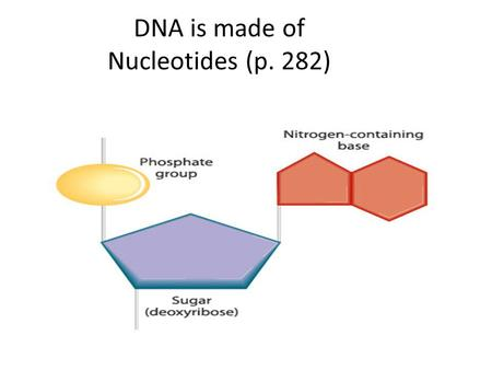 DNA is made of Nucleotides (p. 282). Nitrogen Bases.