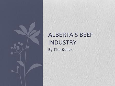 By Tisa Keller ALBERTA'S BEEF INDUSTRY. Pasture During all seasons like spring, summer and fall cows and calves spend most of their days living and feeding.