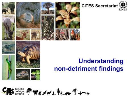 1 Convention on International Trade in Endangered Species of Wild Fauna and Flora Understanding non-detriment findings CITES Secretariat.