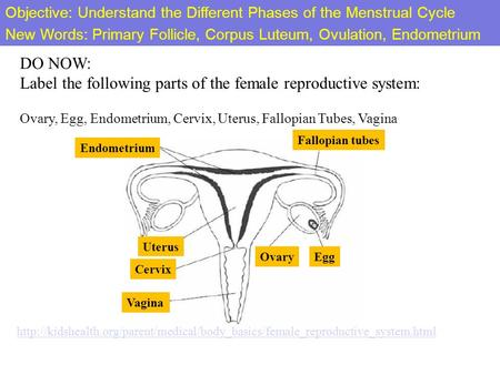 DO NOW: Label the following parts of the female reproductive system: Ovary,