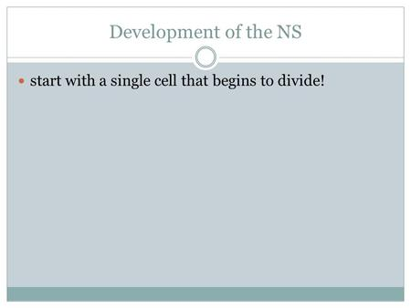 Development of the NS start with a single cell that begins to divide!