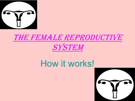 The Female Reproductive System How it works!. FEMALE REPRODUCTIVE SYSTEM.