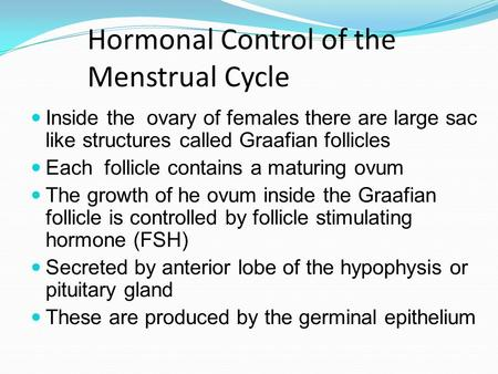 Hormonal Control of the Menstrual Cycle Inside the ovary of females there are large sac like structures called Graafian follicles Each follicle contains.