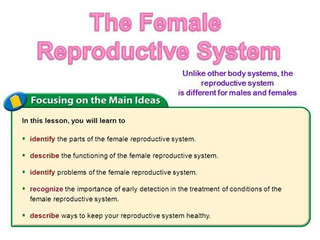 Female reproductive system ppt video online download the female reproductive system ccuart Image collections