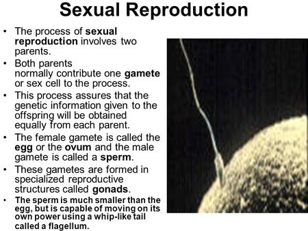 Sexual Reproduction The process of sexual reproduction involves two parents.   Both parents normally contribute one gamete or sex cell to the process.