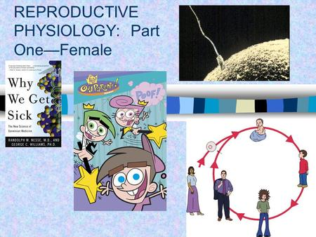REPRODUCTIVE PHYSIOLOGY: Part One—Female