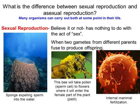 What is the difference between sexual reproduction and asexual reproduction? Sexual Reproduction- Believe it or not- has nothing to do with the act of.