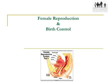 Female Reproduction & Birth Control. Outline: Female Reproductive Oogenesis X-Inactivation Anatomy: names of major organs and structures Physiology: function.