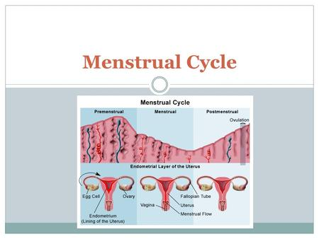 Menstrual Cycle. Facts about You As a fetus, you have more than 7 million eggs! At birth, 1-2 million are left At puberty, about 300,000 are left. Only.