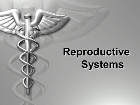 Reproductive Systems. A B C D E F G H I I.Male or Female?  Function is to produce and deliver sperm.