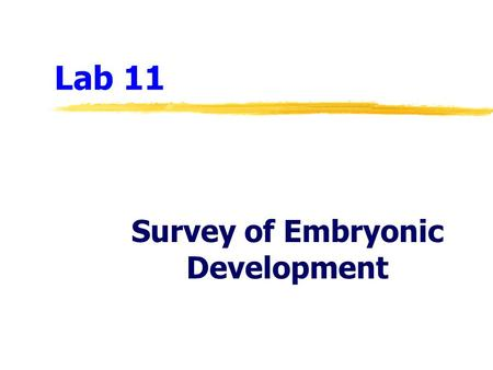 Lab 11 Survey of Embryonic Development. Lab 11  Hormonal controls of the menstrual (ovarian and uterine) cycles  Fertilization, implantation, and early.