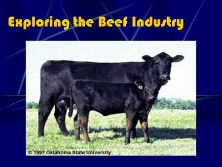 Exploring the Beef Industry