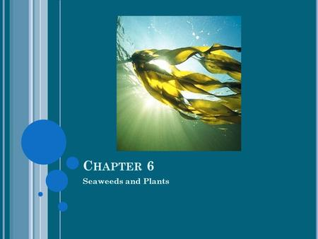 Chapter 6 Seaweeds and Plants.