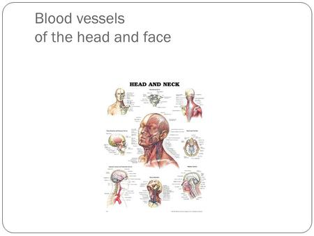 Blood vessels of the head and face