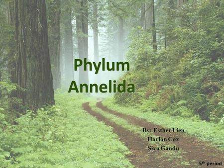 Phylum Annelida By: Esther Lien Harlan Cox Siva Gandu 5 th period.