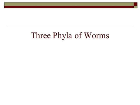 Three Phyla of Worms. Review the Animal Kingdom  4 Major Characteristics?  Multicellular  Eukaryotic  Heterotrophs  Cells lack cell walls.