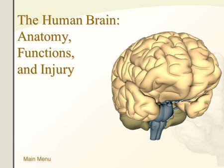 The Human Brain: Anatomy, Functions, and Injury. Main Menu Brain Anatomy Brain Functions Injury Mechanisms.