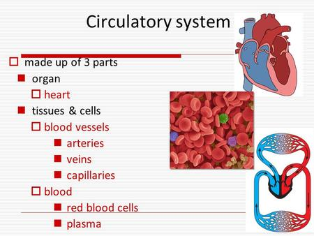 Circulatory system  made up of 3 parts organ  heart tissues & cells  blood vessels arteries veins capillaries  blood red blood cells plasma.