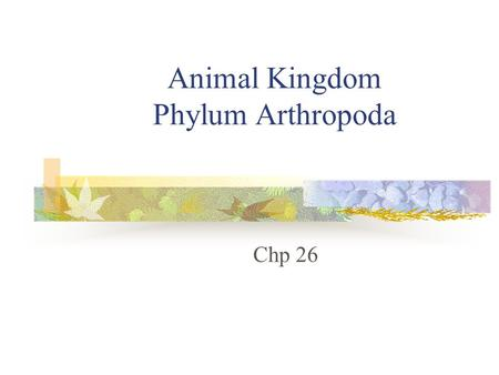 Animal Kingdom Phylum Arthropoda Chp 26. Why are there so many arthropods? Appeared more than 600mya Started in water then moved to land First body form.