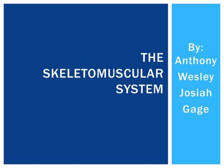 By: Anthony Wesley Josiah Gage THE SKELETOMUSCULAR SYSTEM.