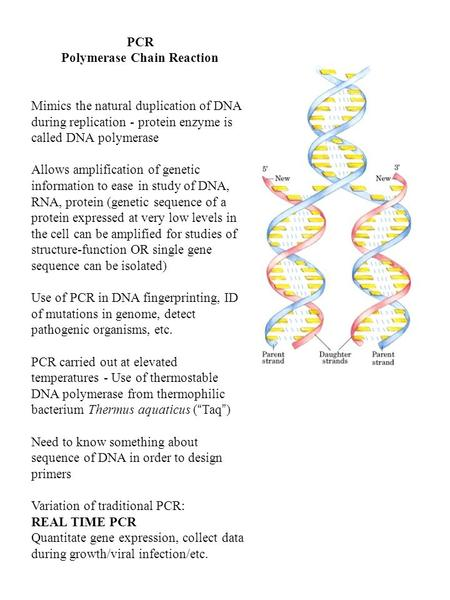 PCR Polymerase Chain Reaction Mimics the natural duplication of DNA during replication - protein enzyme is called DNA polymerase Allows amplification of.
